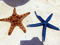 セブ島体験談「5年振りのセブ旅行」のイメージ画像