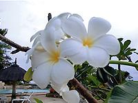 セブ島体験談「助けて頂き、見守られて」のイメージ画像