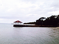 セブ島体験談「回数を重ねるごとに楽しみを発見!」のイメージ画像