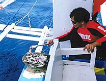 セブ島体験談「行くたびに新しいセブ」のイメージ画像