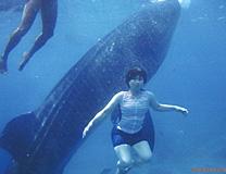 セブ島体験談「感動のセブ旅行」のイメージ画像