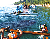 3回目のセブはジンベエザメに会いに体験談「3回目のセブはジンベエザメに会いに」のイメージ画像