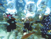 セブ島体験談「一生に一度、海の中!」のイメージ画像
